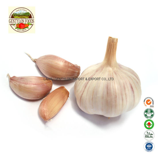 2019 New Crop China Fresh White Garlic pictures & photos
