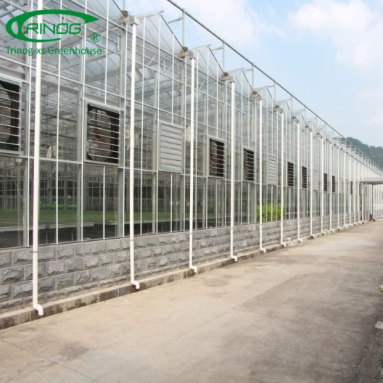 Commercial hydroponics venlo glass greenhouse with climate control system