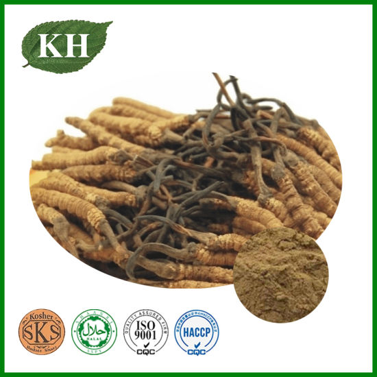 Cordyceps Mycelia Extract Polysaccharides 10%, 20%, 30%, 40% UV