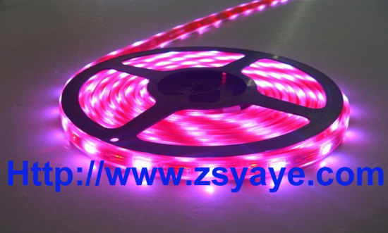 SMD 5050 LED Flexible Strip Light (YAYE-R5050FS30-12V) pictures & photos