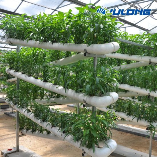 Commercial Turnkey Poly Climate Control Multi-Span Farm PC Sheet Greenhouse