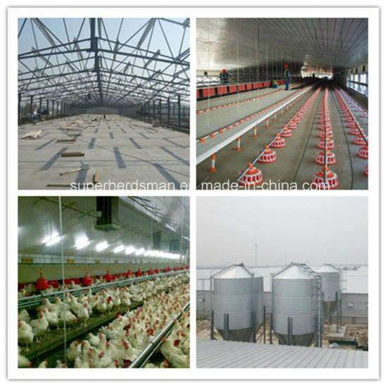 Poultry Feeding Equipment for Broiler Production pictures & photos