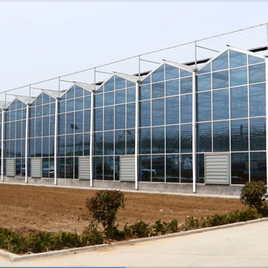 Agriculture Hydroponic Systems Equipment Multi-Span Glass Greenhouse