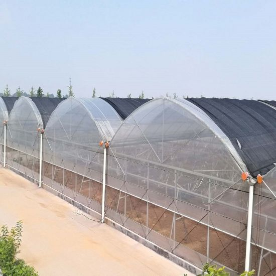 Tomato Multi Span Plastic Film Greenhouse with Hydroponic Systems