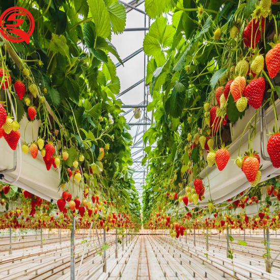 Sales of PC Panel Greenhouse for Agricultural Planting