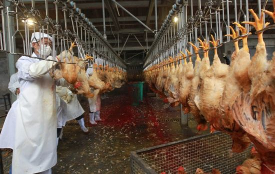 Full Automatic Control Type Chicken Slaughter Line pictures & photos