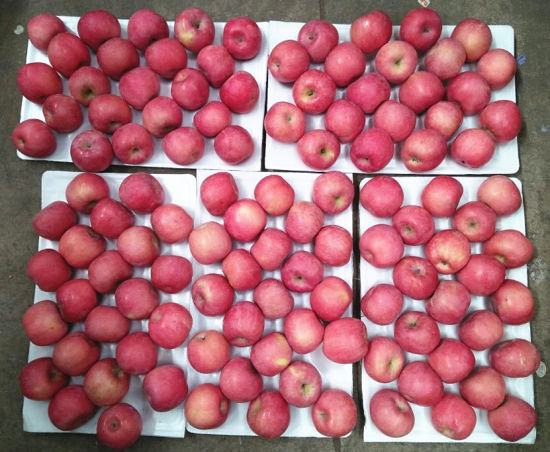 Good Quality Sweet Juciy Fresh FUJI Apple pictures & photos