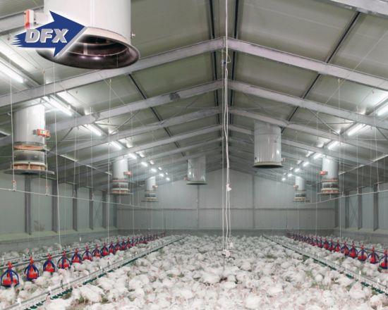 layer farming business plan