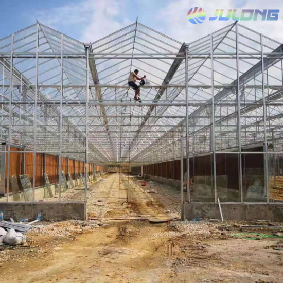 2019 Newest Deisgn Steel Structure Greenhouse Glass Greenhouses for Sale