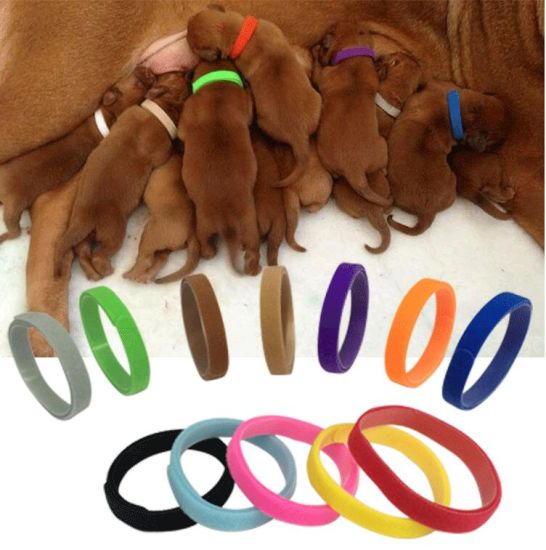 12 Colors Adjustable Puppy ID Collars Bands