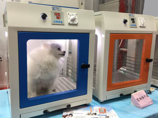 China Cheap Large Pet Grooming Hair Dryer Machine For Dogs