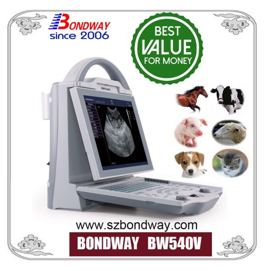 Vet Diagnosis Equipment Digital Veterinary Ultrasound
