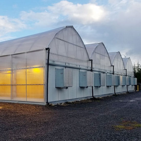 Full Auto Blackout Light Deprivation Industrial Plastic Film Greenhouse for Sale