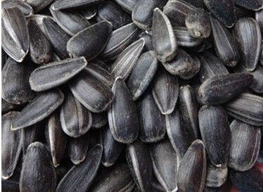 High Quality Sunflower Seeds Oil Grade