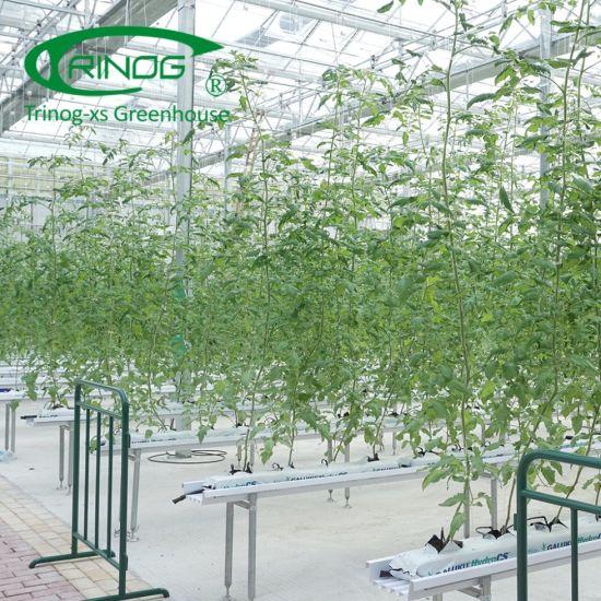 Tomato hydroponics agricultural equipment for farm