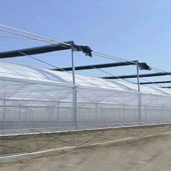 Multi-Span PE/Po Film Greenhouse for Planting Vegetables