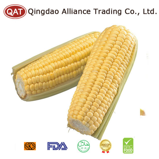 2017 New Crop IQF Sweet Corn COB