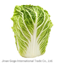 New Fresh Competitive Cabbage Supplier (1.5kg) pictures & photos