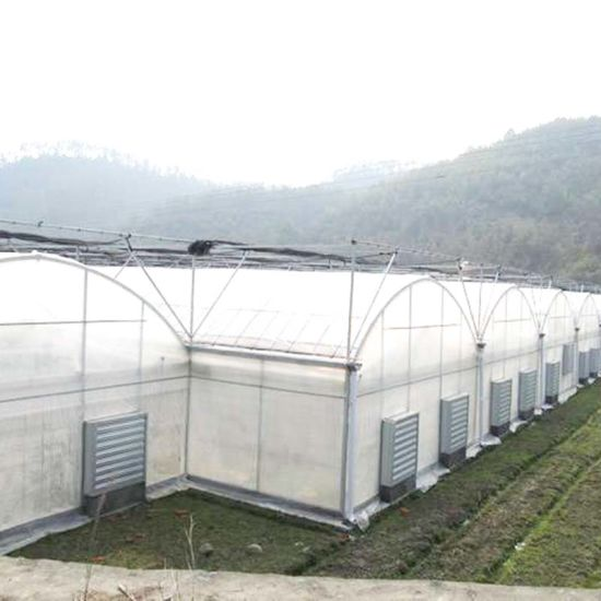 Agriculture Film Greenhouse for Seeding Planting Vegetables/Cucumber