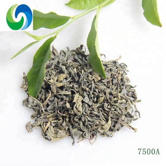 Popular Sales Product Dry Tea China Chunmee Green Tea 7500