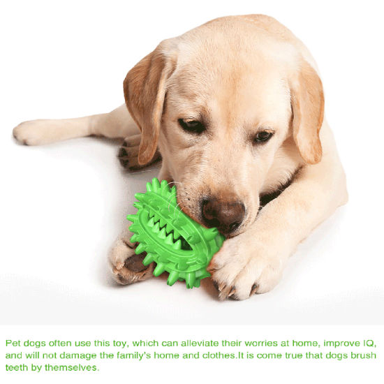 New Pet Supplies Dog Toy Cactus Shaped Tooth Grinder Toothbrush Dog Bite Rubber Toy/Pet Toy/Factory Wholesale Price
