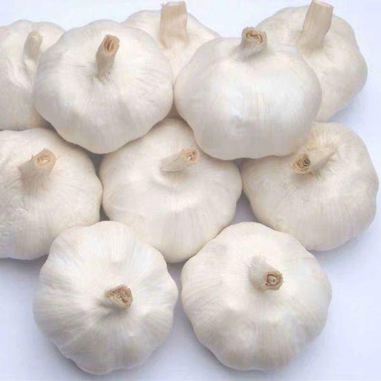 Fresh White Garlic/Pure White Garlic/Chinese Garlic with 3kg/5kg/10kg/20kg Mesh Bag Packing
