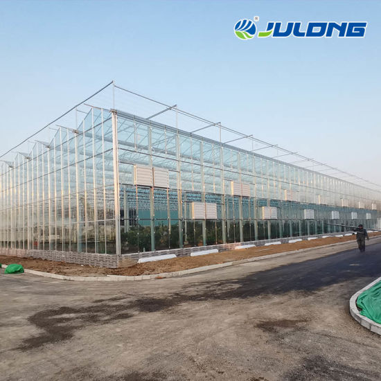 Commercial Venlo Type Multi Span Glass Greenhouse with Hydroponics System for Tomato/Pepper/Cabbage/Cucumber