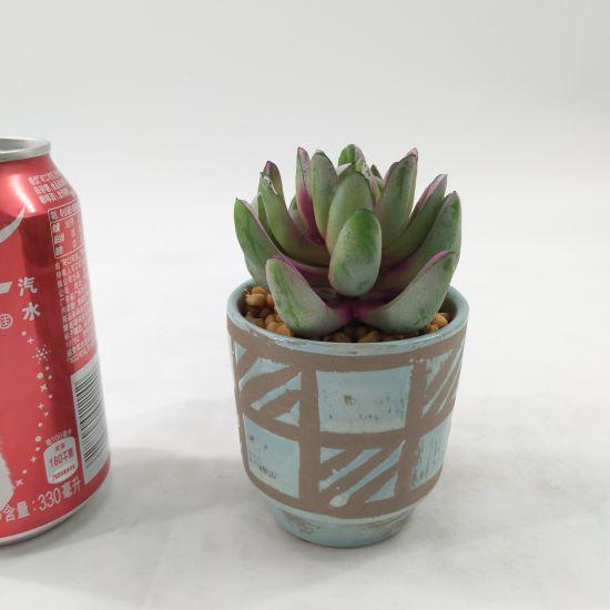 Artificial Succulent Colourful Ceramic Home Decoration