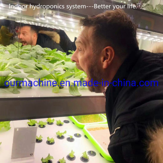Indoor Small Hydroponics Nft Growing System/Soilless Cultivation with LED Light
