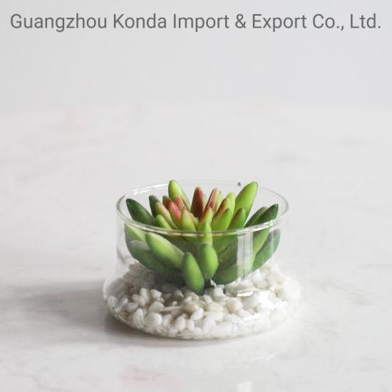 Natural Blue Decorative Artificial Bonsai Plant Succulent