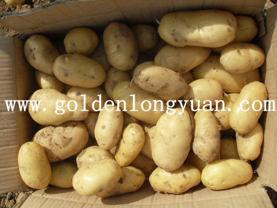 Fresh New Crop Potato From Shandong Origin pictures & photos