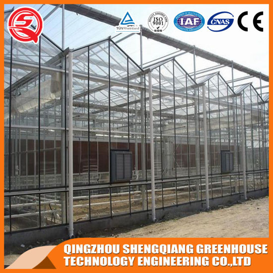 Agriculture Single-Span PC Sheet Greenhouse with Cooling Sysytem for Vegetable/Strawberry