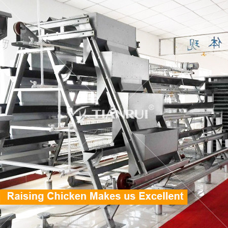 Factory Direct Hot Galvanized Automatic Layer Chicken Battery Cage