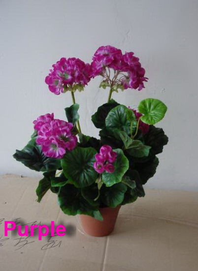 Best Selling Decorative Geranium Artificial Flowers pictures & photos