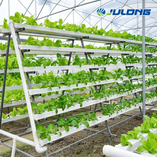 Multi-Span PE Film Lettuce Vegetables Hydroponic Growing Greenhouse