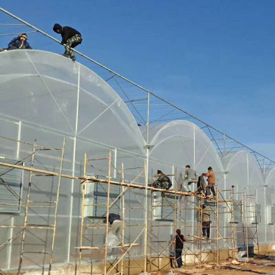 Plastic Film Covered Agricultural Shading Green House