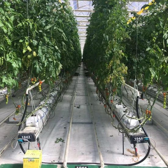 Facilities for Agro-Ecological Greenhouse Cultivation of Plants