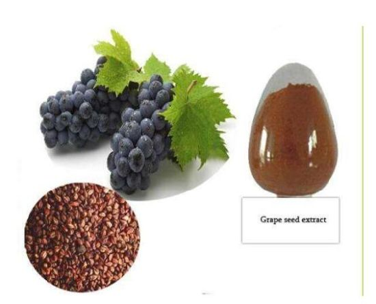 High Quality 95%OPC Procyanidine Natural Grape Seed Extract