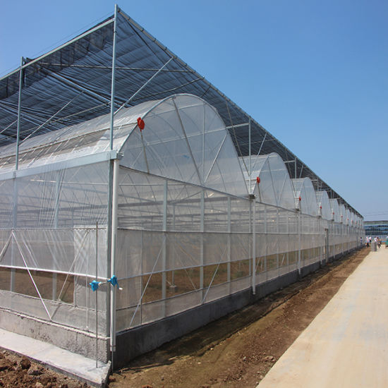 Multi Span Vegetable Greenhouses with Hydroponic System