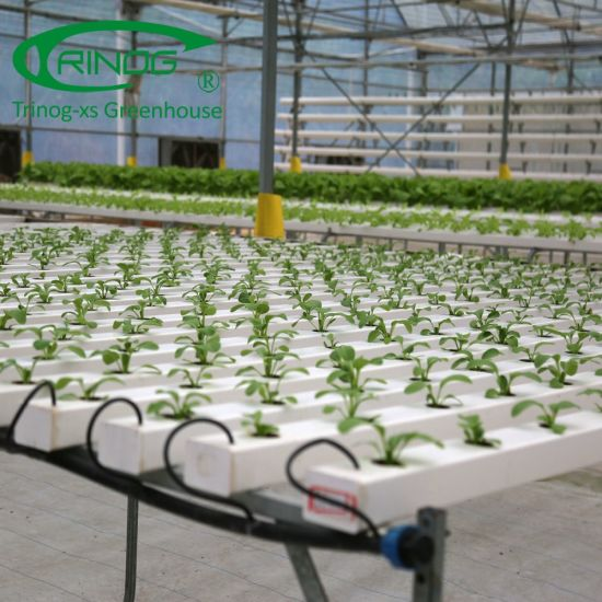 Flat NFT Hydroponics system in greenhouse for lettuce