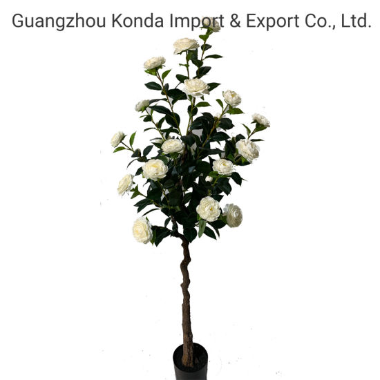 Indoor and Outdoor Decor Camellia Trees Quality Flower Plants