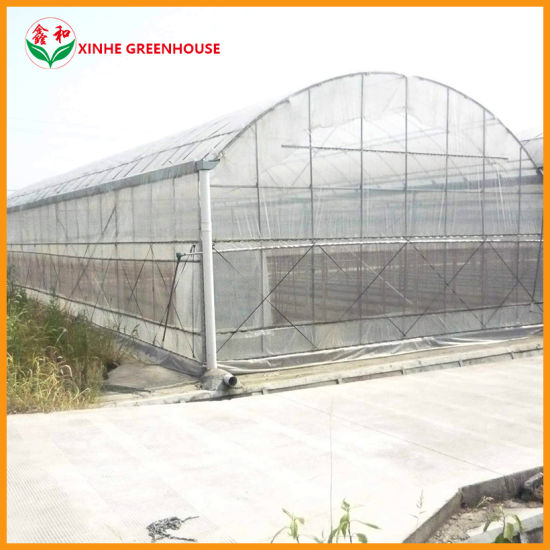 High Tech Agricultural Plastic Po PE Film Plastic Greenhouse for Flower