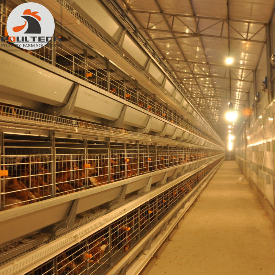 H Frame Layer Chicken Raising Equipment for Big Poultry Farm