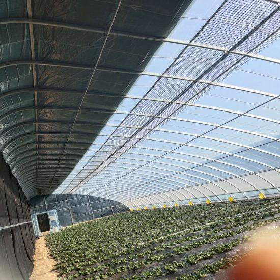 Agricultural Planting Seasons Can Be 8-25 Meters Wide Quilt Insulation Greenhouse Suitable for Tomato Pepper Yellow Flowers and Strawberry Planting