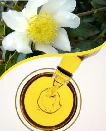 Cooking Oil for Camellia Oil with Cosmetic Used