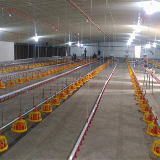 Automatic Poultry Livestock Equipment for Broiler Chicken