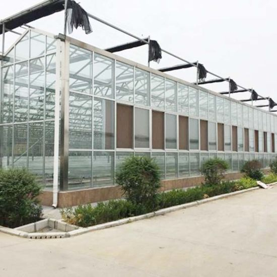 Multi-Span Agriculture Hydroponic Systems Glass Greenhouse for Peppers