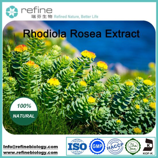 Rhodiola Rosea Extract / Rosavins / Salidroside pictures & photos