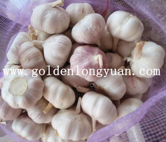 Fresh Garlic Professional Manufacturer From China pictures & photos