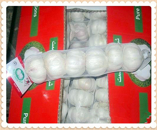 Good Quality Fresh Garlic for Middle East Market